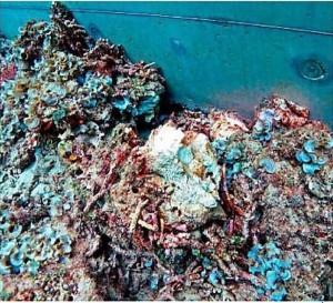 4さんご礁