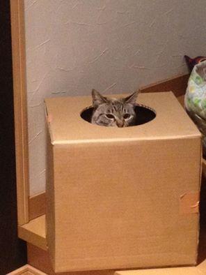 猫はいつも・自由だ~~