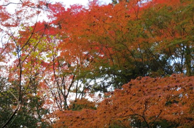 法然院・悲願会・紅葉を楽しむ
