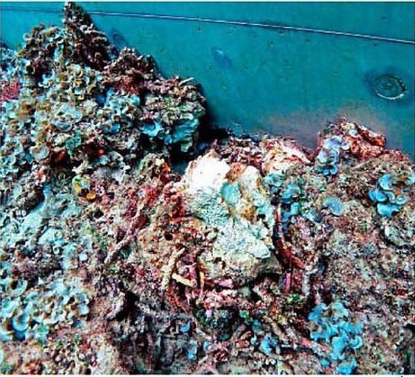 さんご礁を破壊するブロック