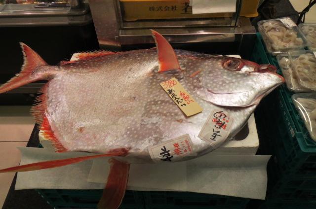 こんな魚がいたのだ!
