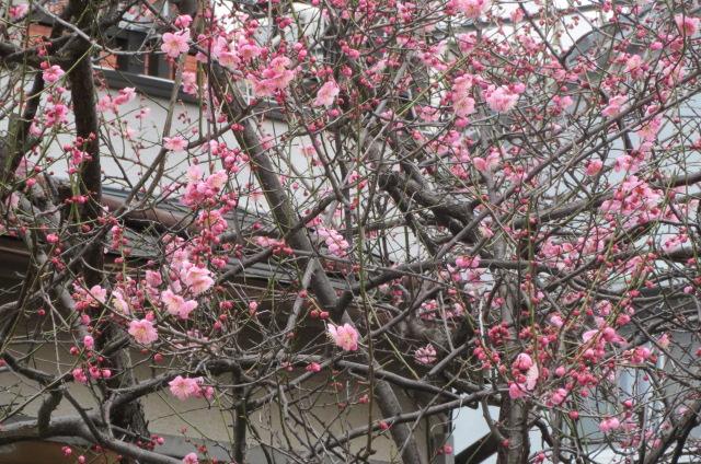 歩くと発見・春を感じる
