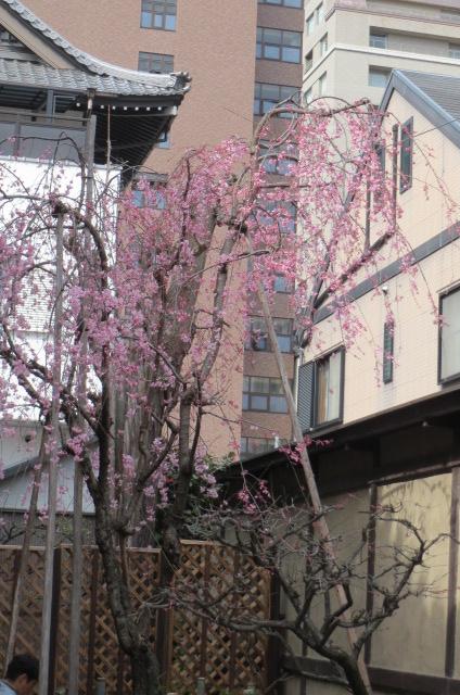 京都も春の兆しが・・・