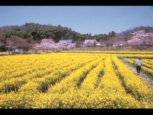 春の普賢寺