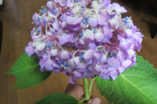 花の水揚げを良くする自作のポット