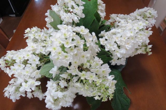 柏葉紫陽花・花々が踊っているよう!