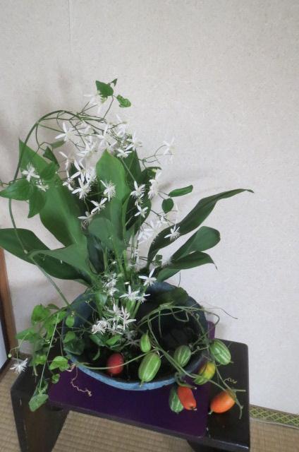 仙人草と烏瓜・満足・満足