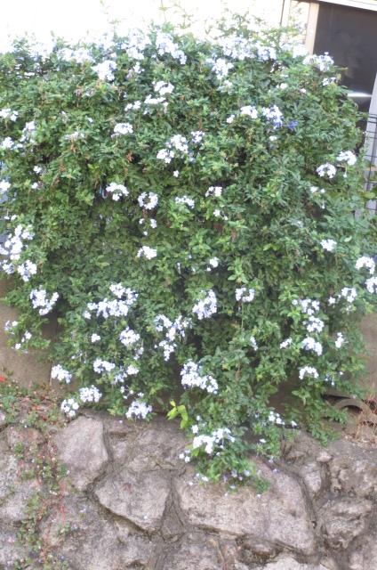 風・光を入れると花が変化?