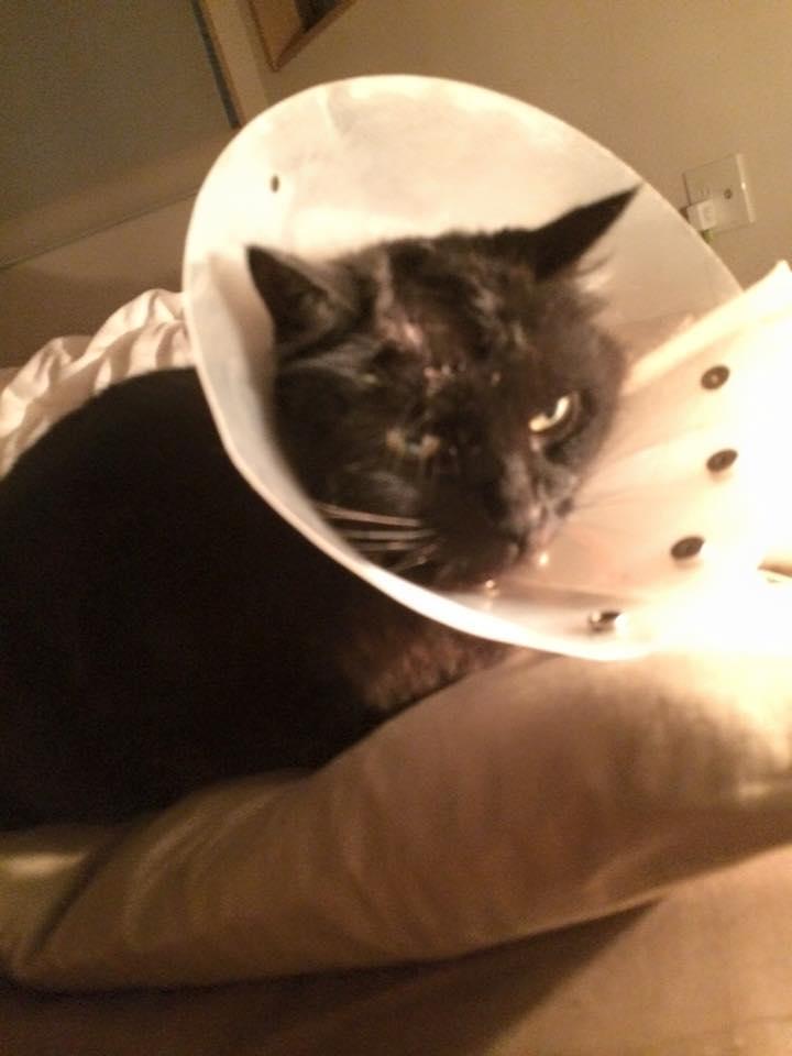 怪我してしゅん太郎猫です!