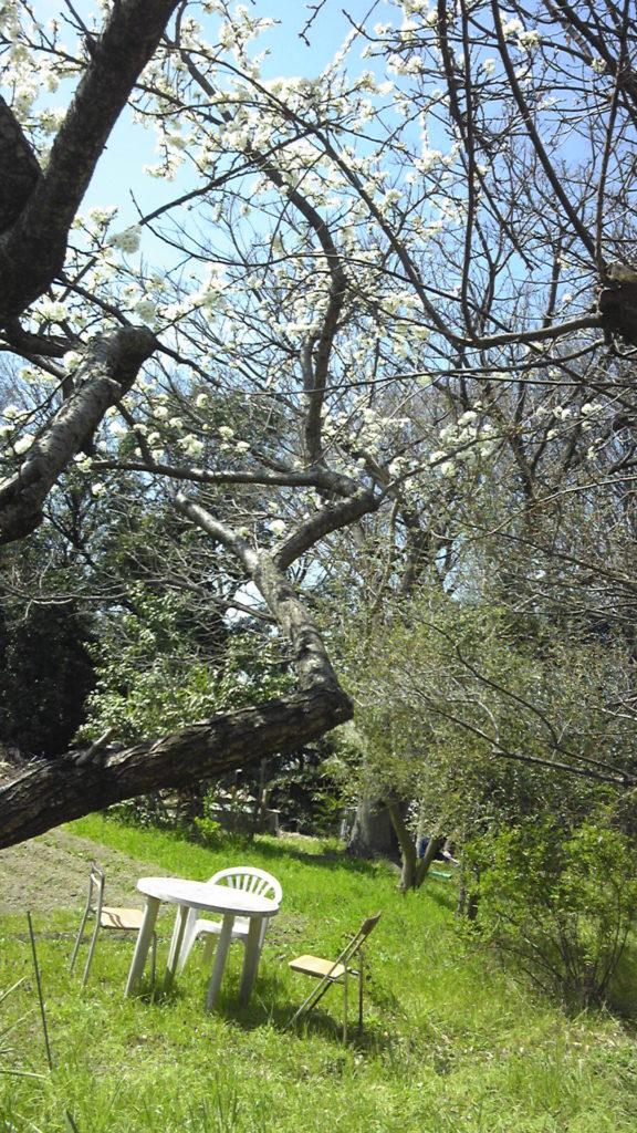 桜咲く・贅沢な一日。