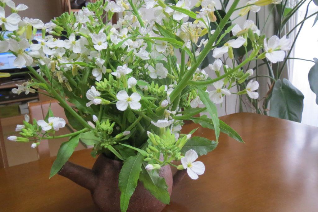 大根の花・活き活きとさせる・・。