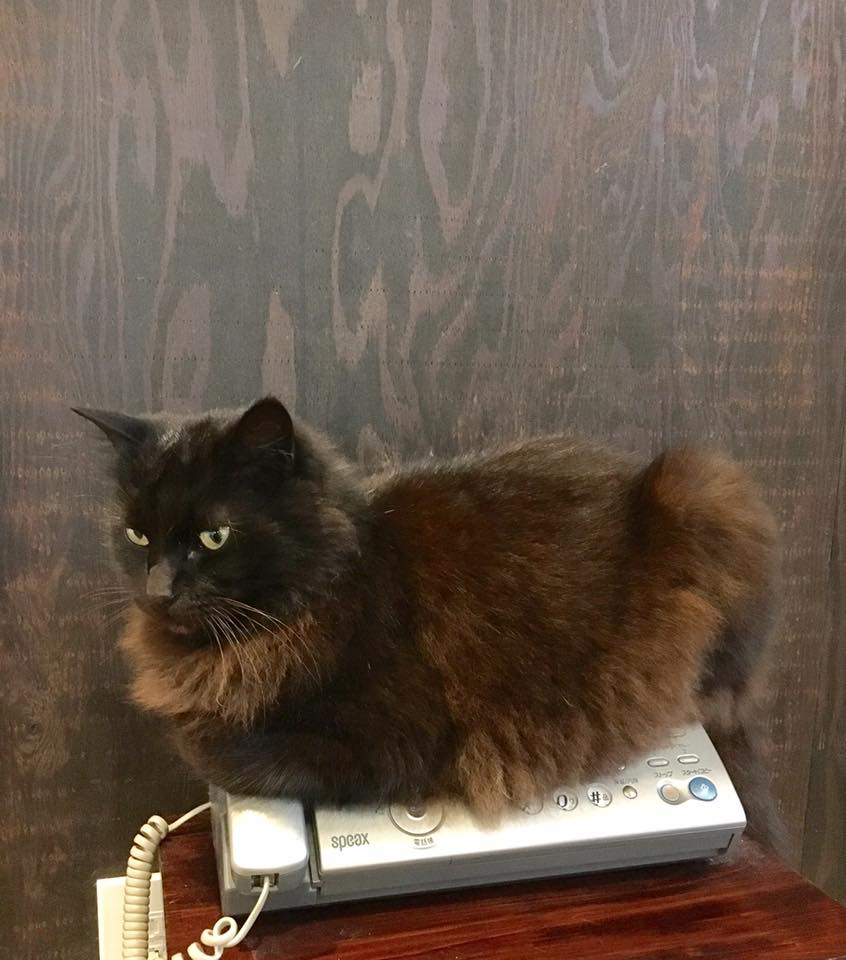 ファックスに乗る猫!