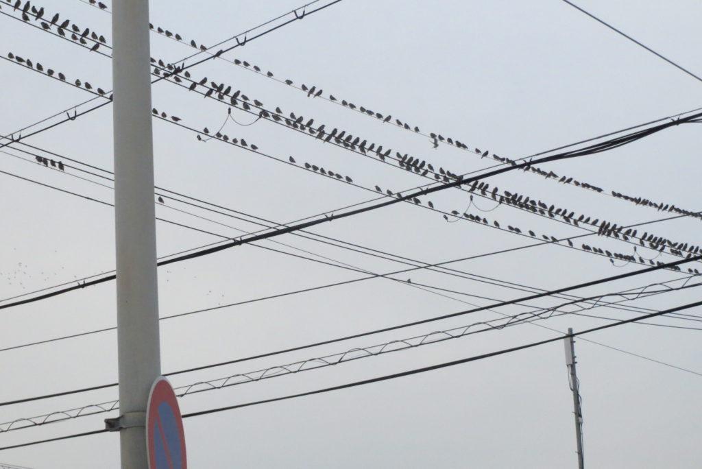 ムクトリの集団・ヒッチコックの「鳥」か!