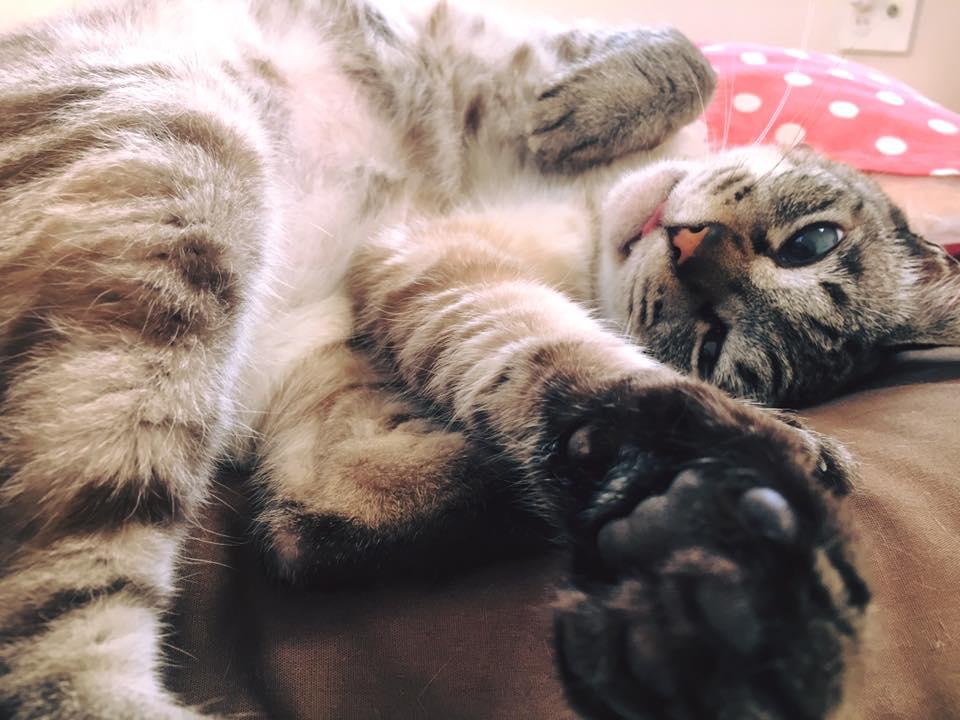 猫も怠惰になる夏・・でも可愛い・・!