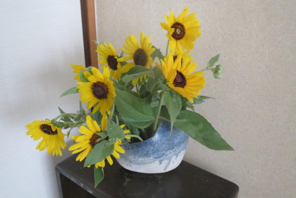農協でひまわりを買う・お気に入りの花器へ。