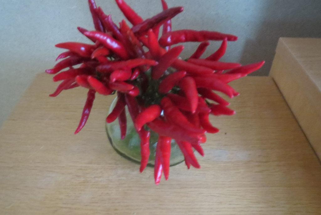 真っ赤な唐辛子の色に魅せられて・・・。