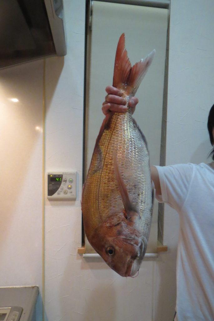 大物釣りの魚!!さばくは婆なり!見事なり!