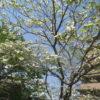季節の花を楽しめる河川敷!